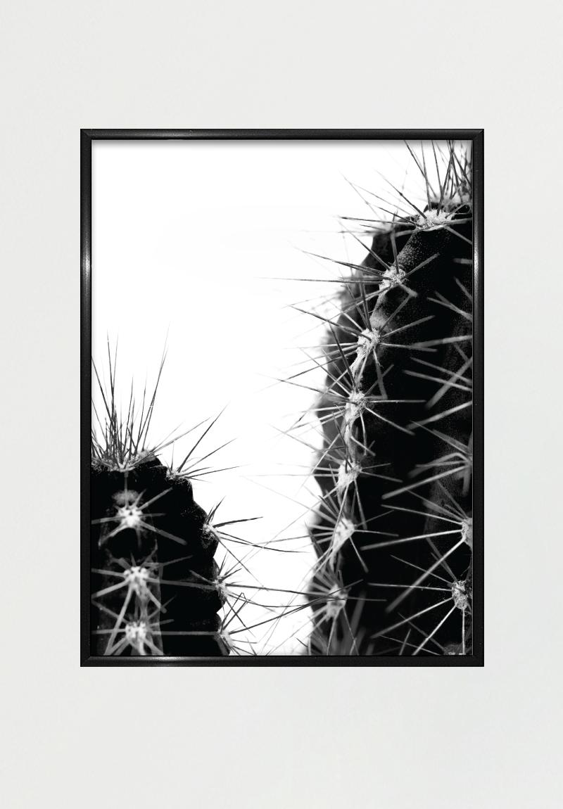 Cactus Iii 30x40